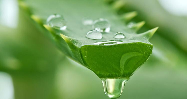 remedios caseros para la caida del cabello aloe